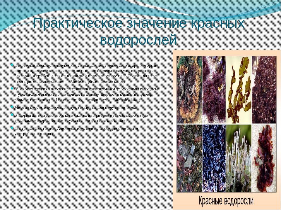 значения водорослей картинка простая
