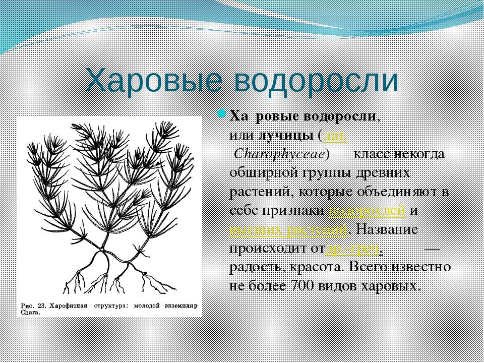 значения водорослей картинка разглядывать