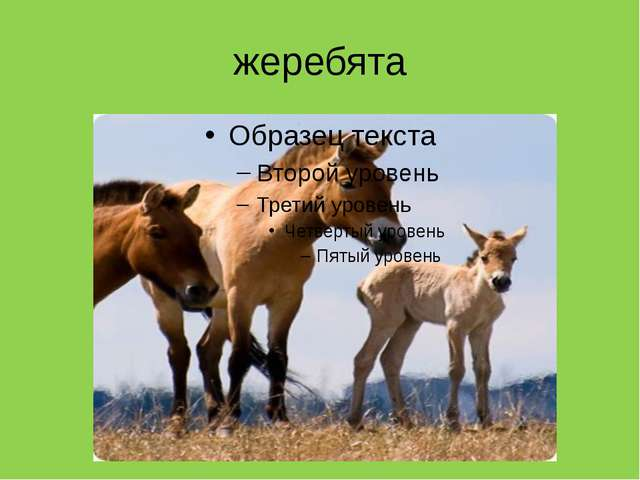 жеребята