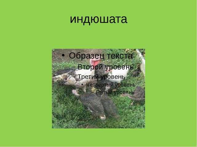 индюшата