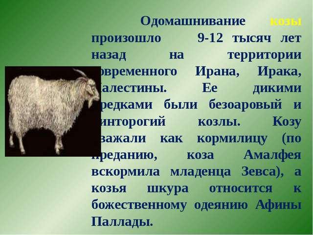 Одомашнивание козы произошло 9-12 тысяч лет назад на территории современного...