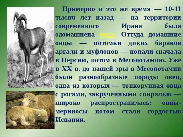 Примерно в это же время — 10-11 тысяч лет назад — на территории современного...