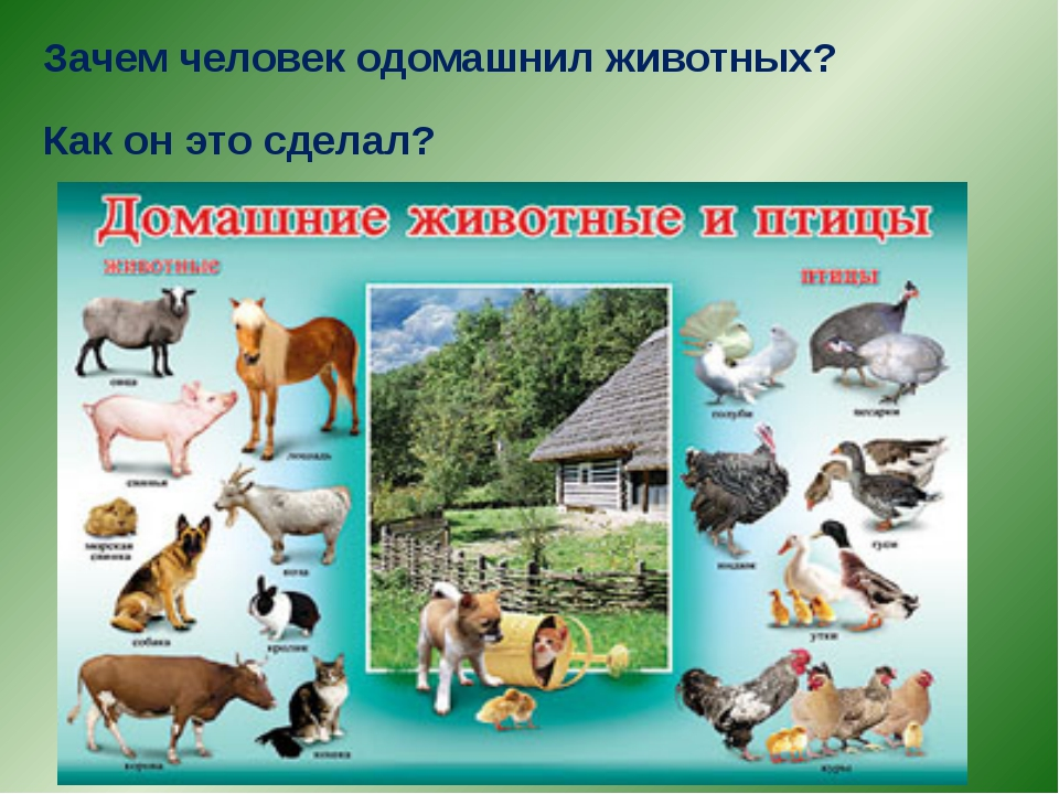 Почему люди приручили диких животных 3 класс школа 21 века 2