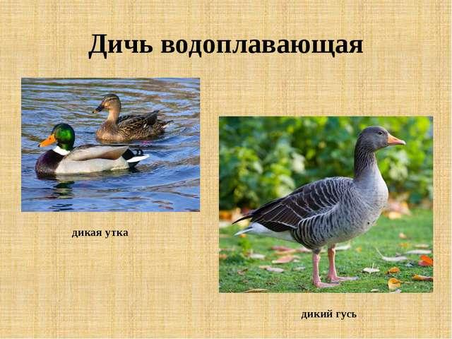 Дичь водоплавающая дикая утка дикий гусь