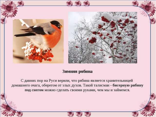Зимняя рябина С давних пор на Руси верили, что рябина является хранительнице...