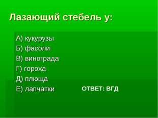 Лазающий стебель у: А) кукурузы Б) фасоли В) винограда Г) гороха Д) плюща Е)