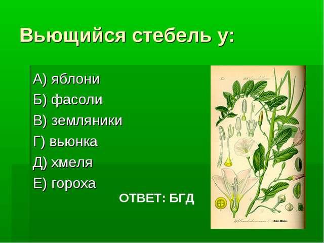 Вьющийся стебель у: А) яблони Б) фасоли В) земляники Г) вьюнка Д) хмеля Е) го...