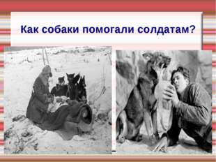 Как собаки помогали солдатам?