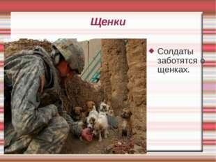 Щенки Солдаты заботятся о щенках.