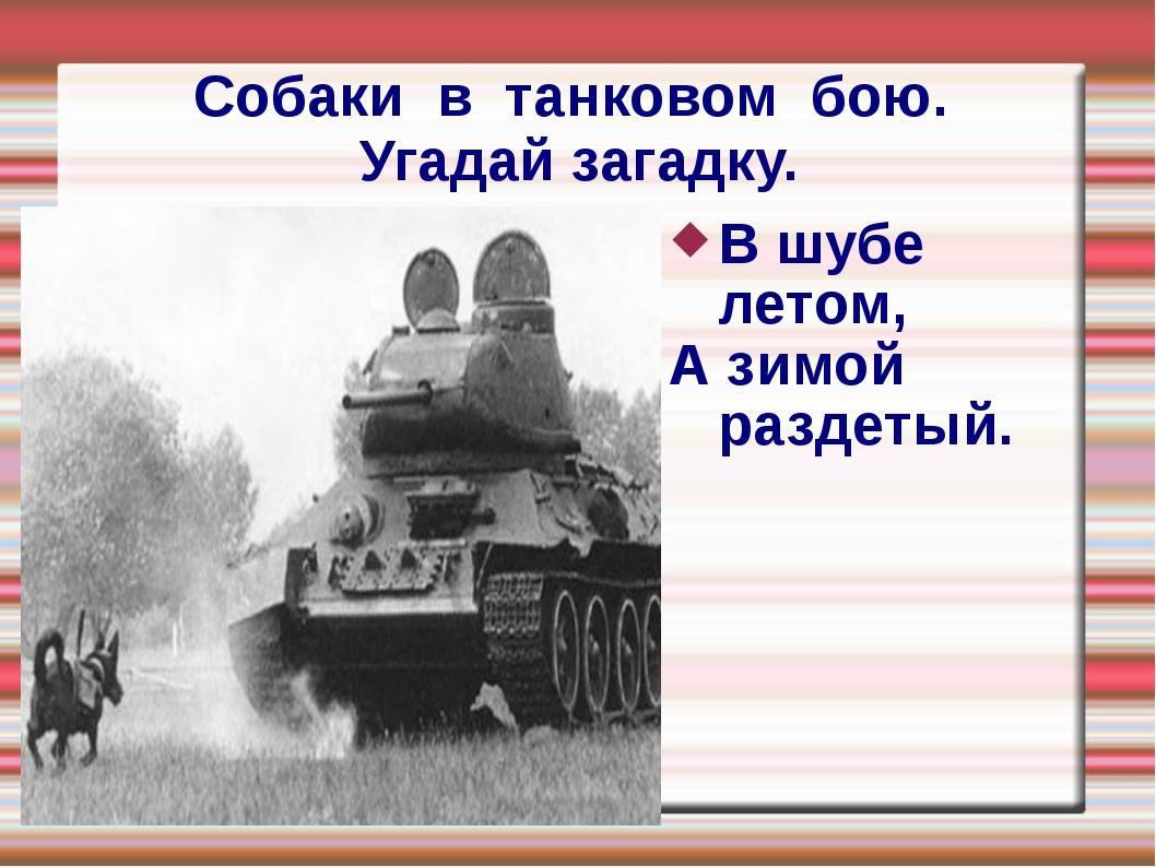Собаки в танковом бою. Угадай загадку. В шубе летом, А зимой раздетый.
