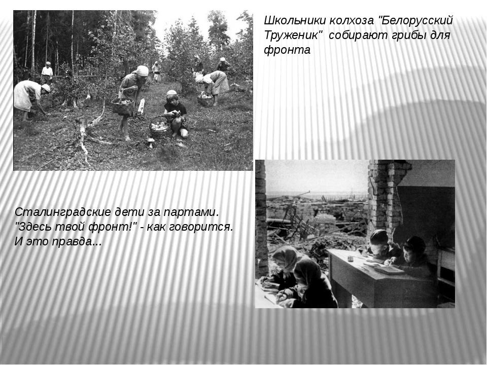 """Школьники колхоза """"Белорусский Труженик"""" собирают грибы для фронта Сталинград..."""