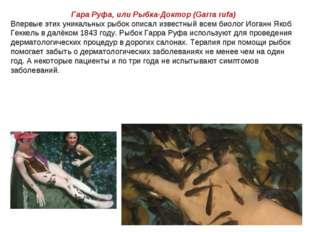 Гара Руфа, или Рыбка-Доктор (Garra rufa) Впервые этих уникальных рыбок описал