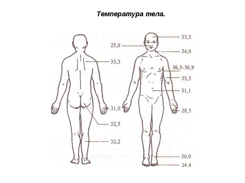 Температура тела.