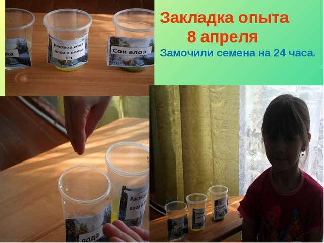 Закладка опыта 8 апреля Замочили семена на 24 часа.