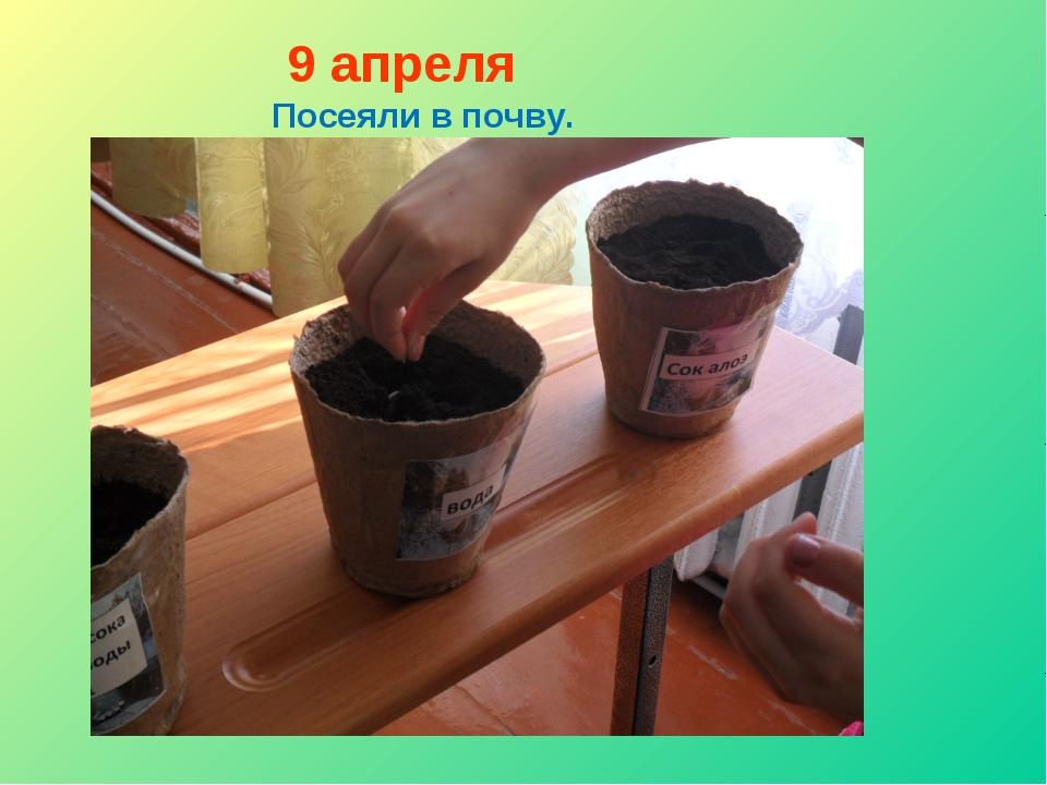 9 апреля Посеяли в почву.