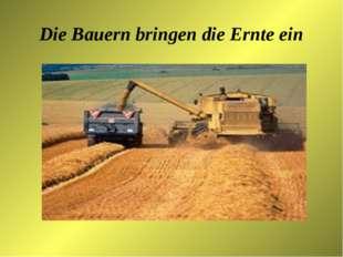 Die Bauern bringen die Ernte ein
