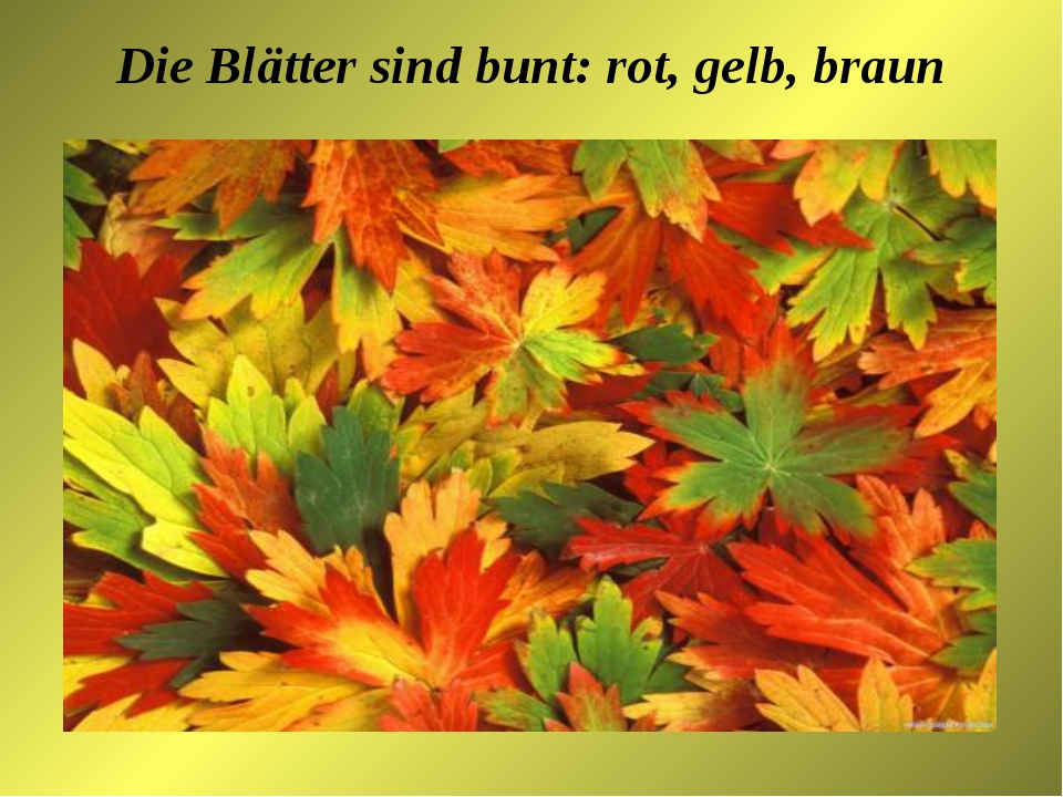 Die Blätter sind bunt: rot, gelb, braun