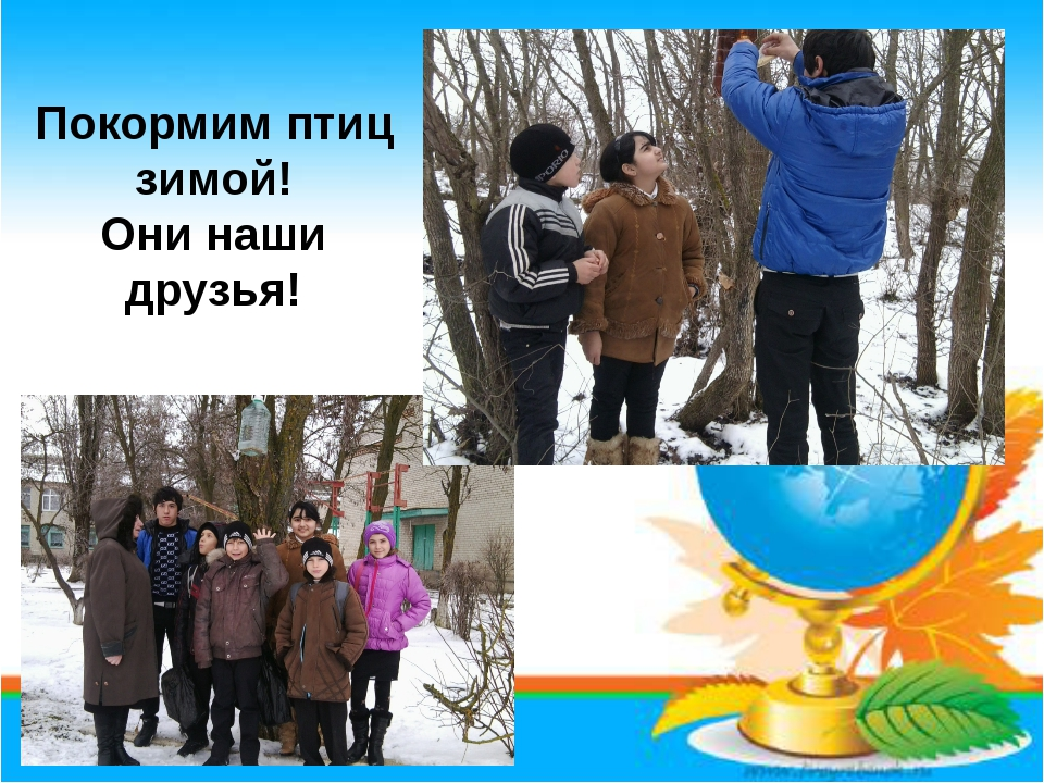 Покормим птиц зимой! Они наши друзья!