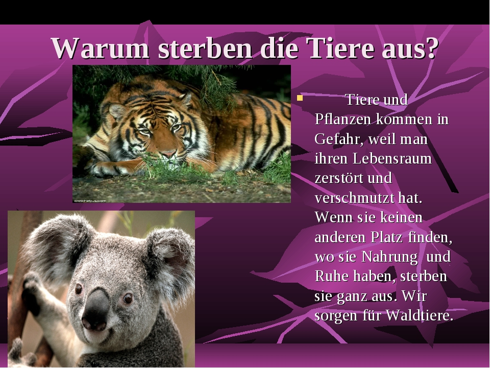 Warum sterben die Tiere aus? Tiere und Pflanzen kommen in Gefahr, weil man i...