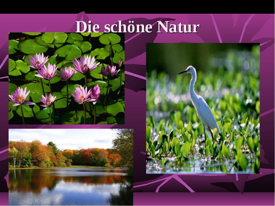 Die schöne Natur