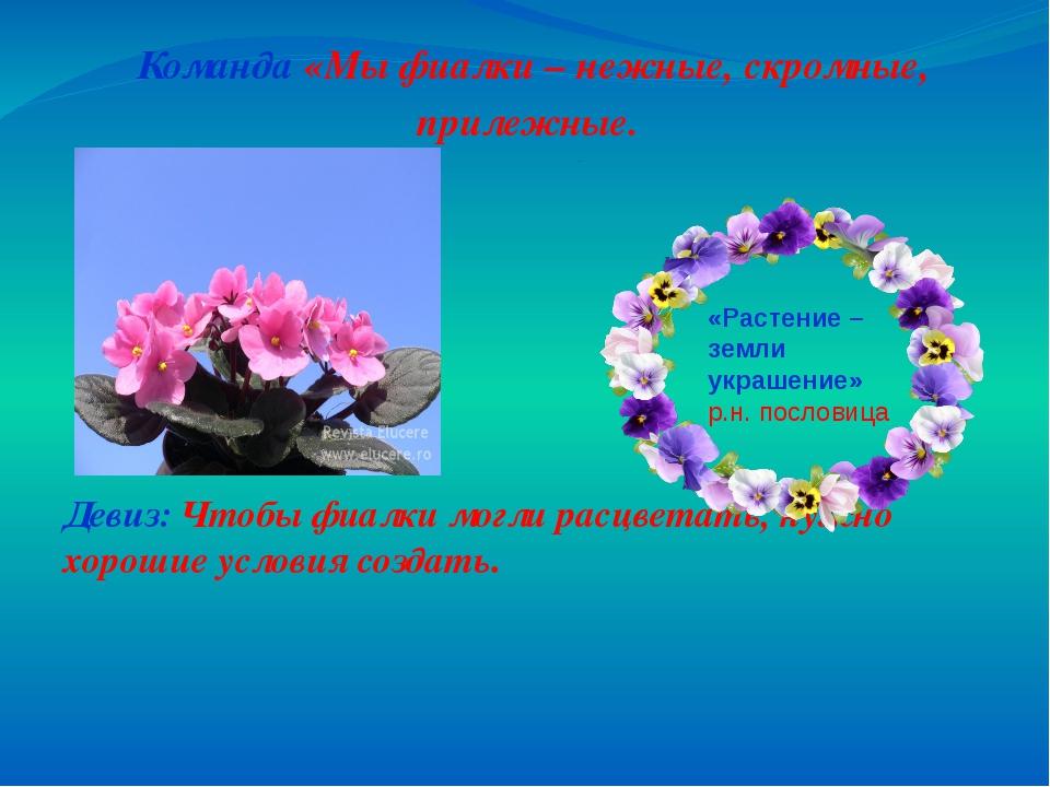 Название и девиз связанные с цветами