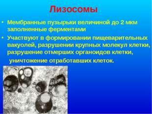 Лизосомы Мембранные пузырьки величиной до 2 мкм заполненные ферментами Участв