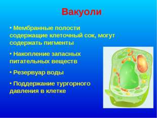 Вакуоли Мембранные полости содержащие клеточный сок, могут содержать пигменты