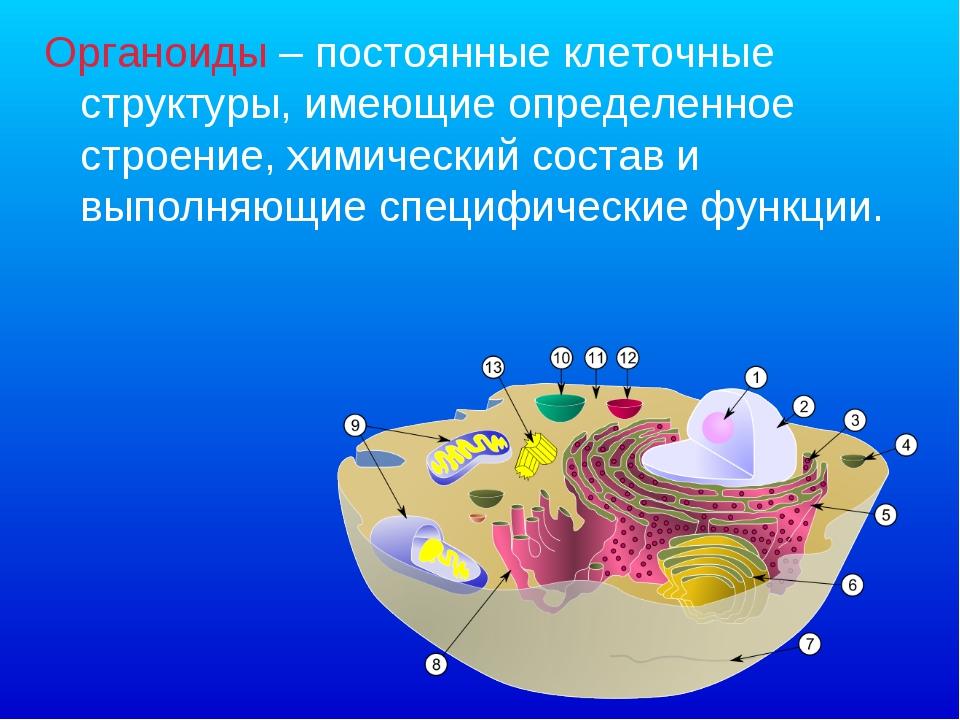 Органоиды – постоянные клеточные структуры, имеющие определенное строение, хи...
