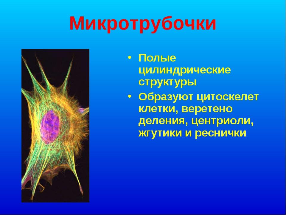 Микротрубочки Полые цилиндрические структуры Образуют цитоскелет клетки, вере...