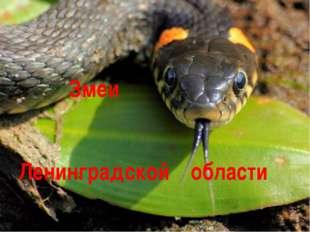 Ленинградской области Змеи