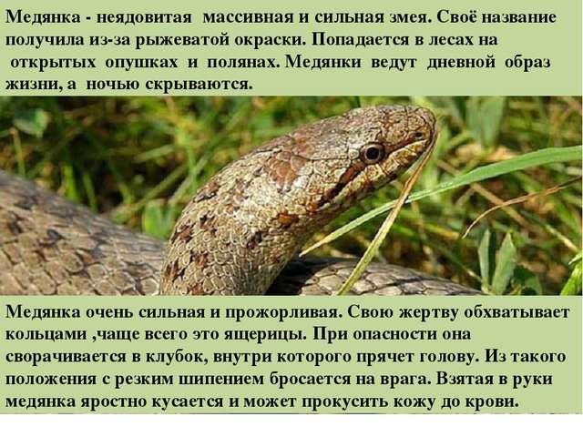 змеи ленинградской области фото