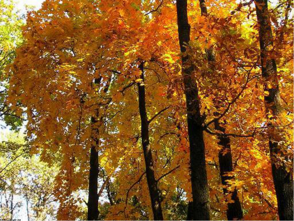 Паровозы, картинка осень с надписью золотая осень