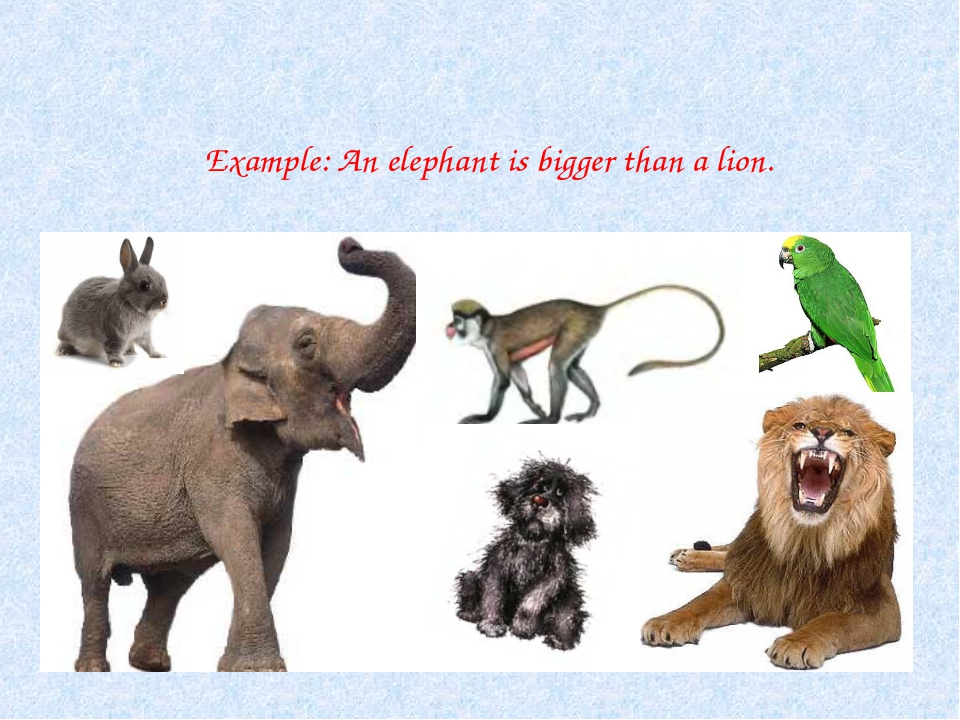 Example: An elephant is bigger than a lion.
