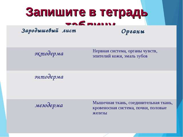 Запишите в тетрадь таблицу Зародышевый лист Органы эктодермаНервная система...