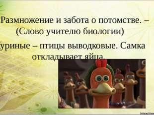 4. Размножение и забота о потомстве. –(Слово учителю биологии) Куриные – птиц