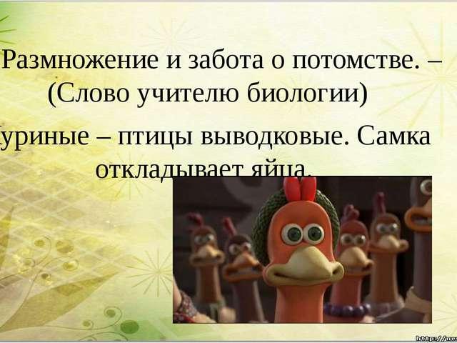 4. Размножение и забота о потомстве. –(Слово учителю биологии) Куриные – птиц...
