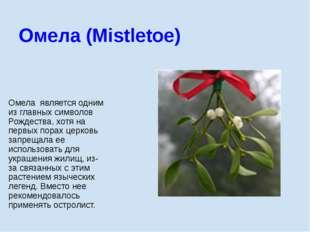 Омела является одним из главных символов Рождества, хотя на первых порах церк