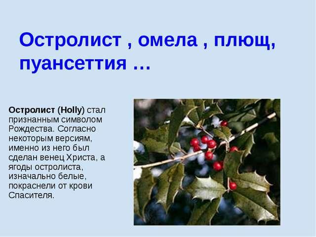 Остролист (Holly) стал признанным символом Рождества. Согласно некоторым верс...