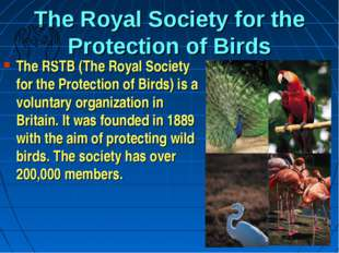 The Royal Society for the Protection of Birds The RSTB (The Royal Society for