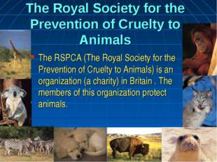 The Royal Society for the Prevention of Cruelty to Animals The RSPCA (The Roy
