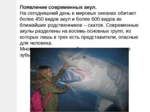Появление современных акул. На сегодняшний день в мировых океанах обитает бол