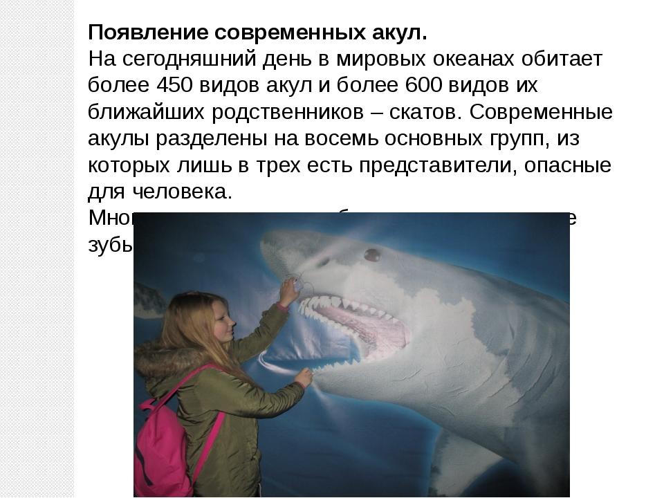 Появление современных акул. На сегодняшний день в мировых океанах обитает бол...