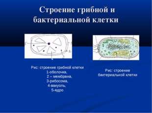 Строение грибной и бактериальной клетки Рис: строение грибной клетки 1-оболо