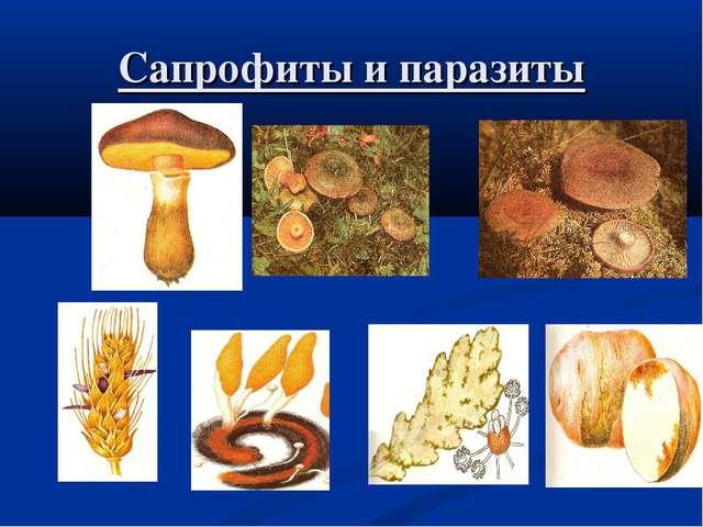 Сапрофиты и паразиты