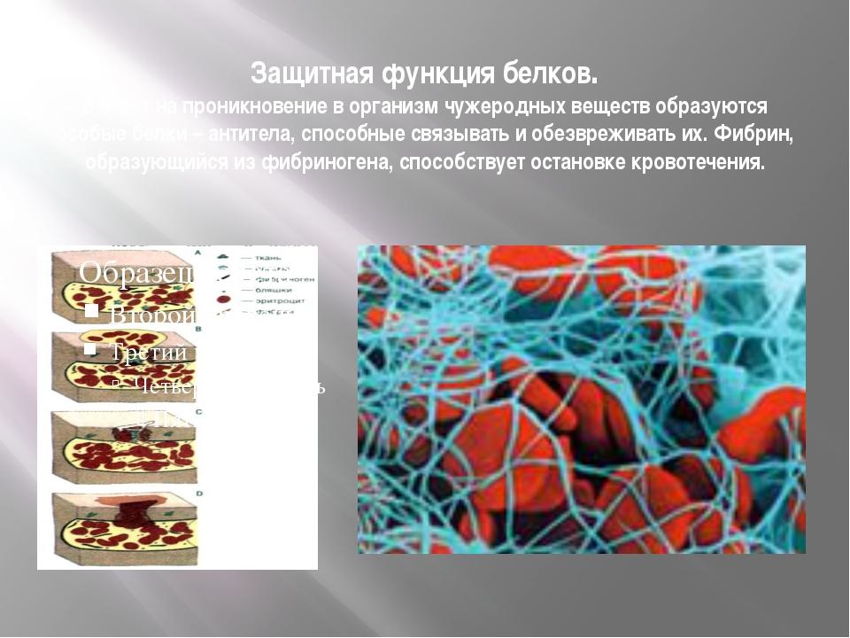 Защитная функция белков. В ответ на проникновение в организм чужеродных вещес...