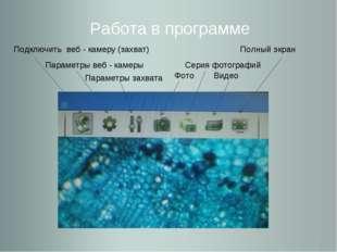 Работа в программе Подключить веб - камеру (захват) Параметры веб - камеры Па
