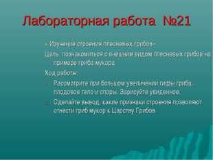 Лабораторная работа №21 « Изучение строения плесневых грибов» Цель: познакоми