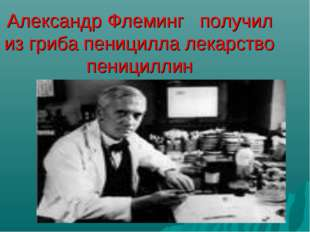 Александр Флеминг получил из гриба пеницилла лекарство пенициллин