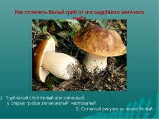 * Как отличить белый гриб от несъедобного желчного гриба Трубчатый слой белый