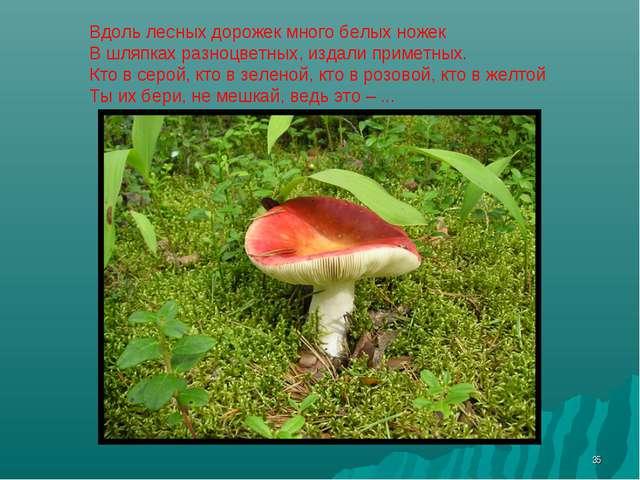 * Вдоль лесных дорожек много белых ножек В шляпках разноцветных, издали приме...